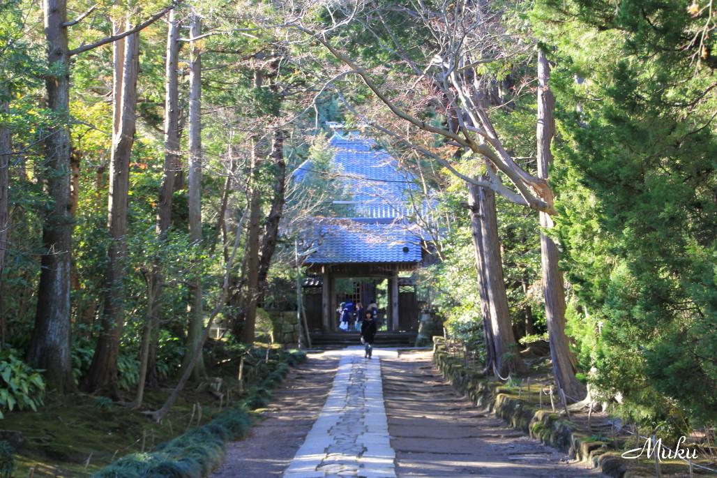 2015.1.3 寿福寺参道 (神奈川県鎌倉市)