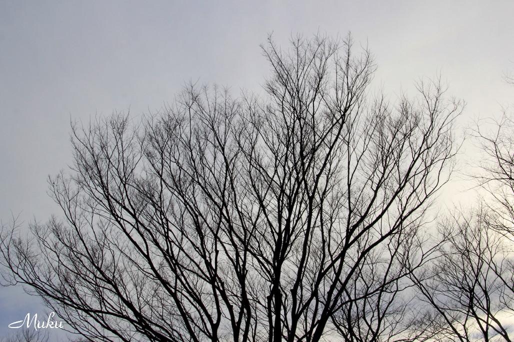 2015.1.15 冬木立 (散歩道:神奈川県横須賀市)