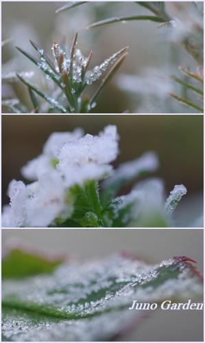霜1228