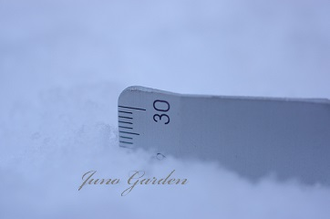 積雪150103