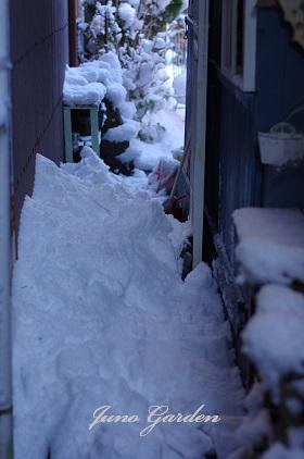 大雪150103