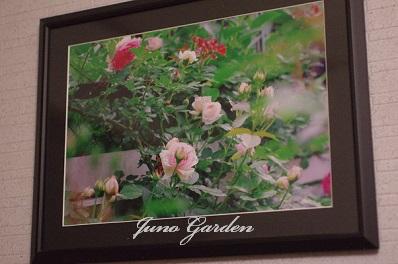 庭のバラ額150115