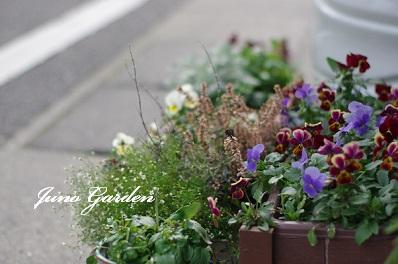 休日の花150125