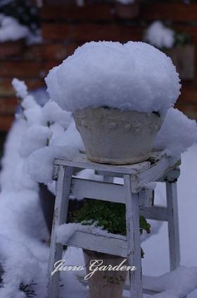 庭の雪150201