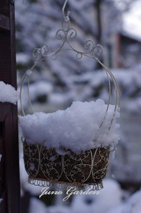 白ムスカリの雪150201