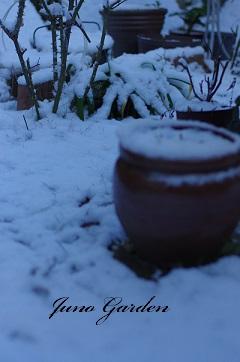庭の雪150214
