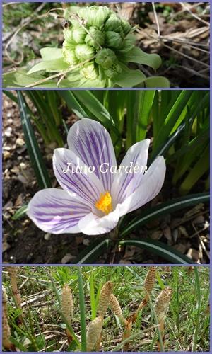 田舎150318花