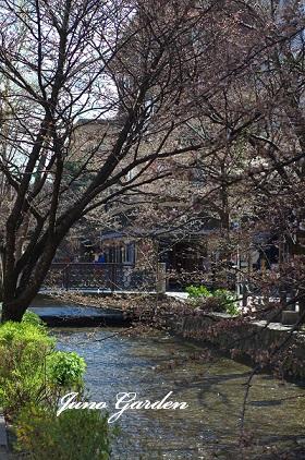 高瀬川150226
