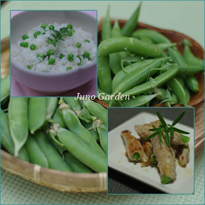 エンドウ豆&スナップ豆