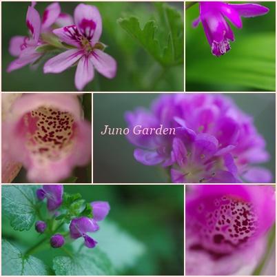 ピンクの花150522