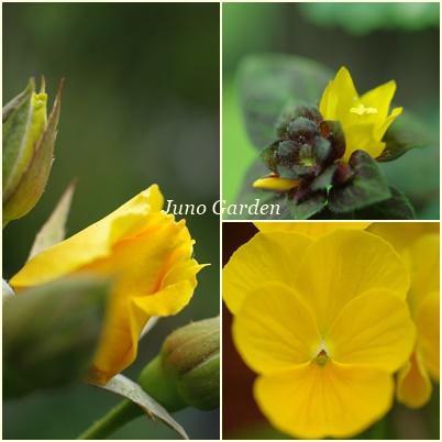 黄色の花150608