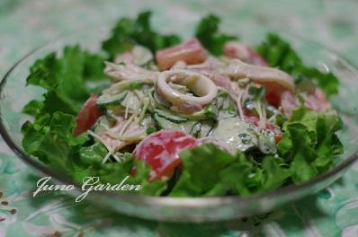 イカときゅうりのサラダ