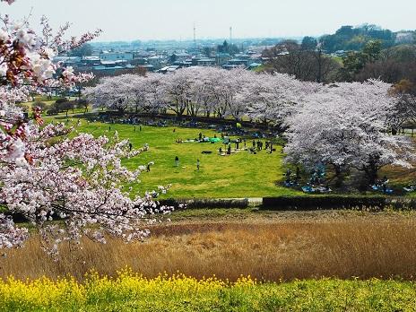 ⑥さきたま古墳公園20150331
