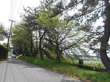 石田堤①20150424