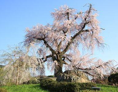 京都 円山公園 裏