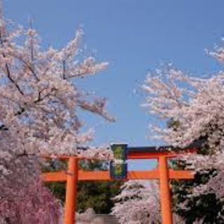 平野神社 の春