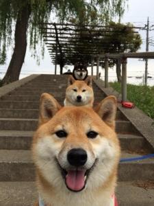 犬のパレードBomZXa2CQAA_33N