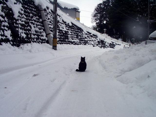 雪中ほたる