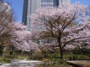 新宿中央公園桜