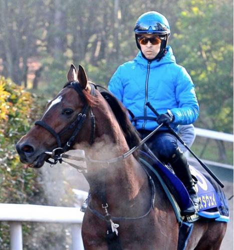 【有馬記念】15番16番で複勝圏に入った馬をご覧下さい