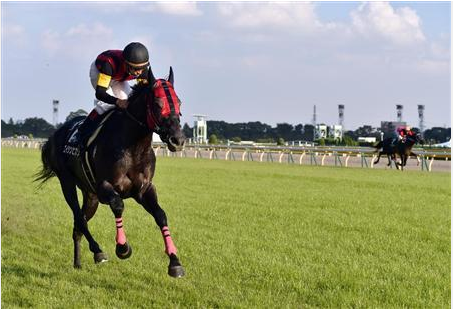 【競馬】「快速」と言われて思い浮かべる馬は?