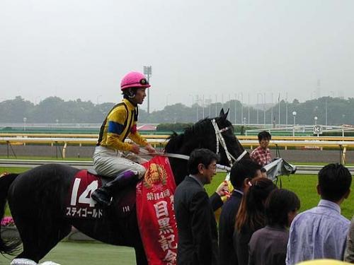 【競馬】競走馬としてのステイゴールドの思い出を語るスレ