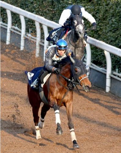 【競馬】第50回デイリー杯クイーンカップ(GIII) 【予想のご参考に】