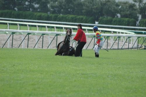 【競馬】予後不良馬が出る度に凹むんだが、、、
