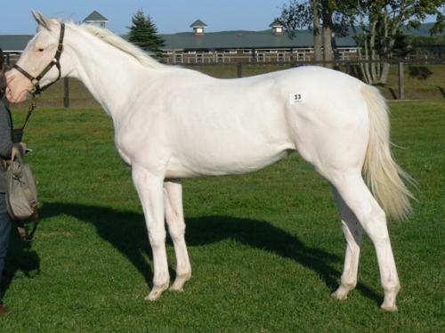 【競馬】ユキチャンの娘 馬名「シロインジャー」