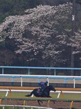 【大阪杯】武豊「ダービー馬に負けは似合わない」【キズナ】