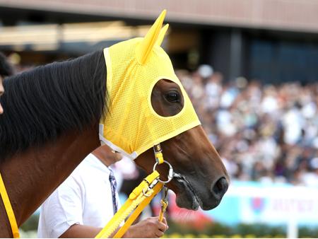 【競馬】ハープスター 右前脚繋靱帯の損傷が判明