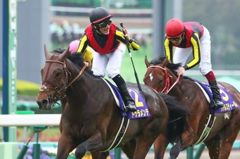 【競馬】Mデムーロ休業届けを提出