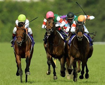 【競馬】ルージュバックは何で1番人気なの?