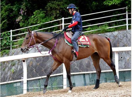 【競馬】メイショウマンボ、ダート地方交流重賞に登録出走へ