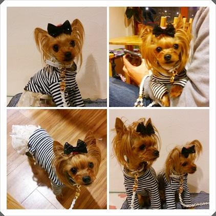 cats-4_20150607101546386.jpg