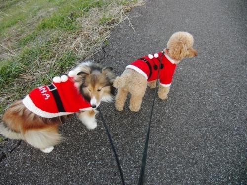 サンタと散歩