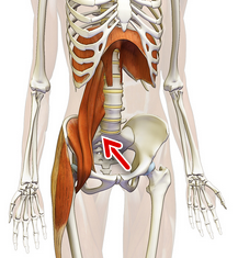 psoas_diaphragm[1]