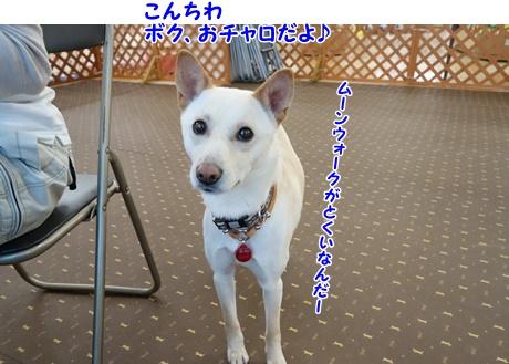DSC01524_20150418131109da4.jpg