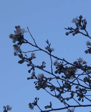 H270402開花