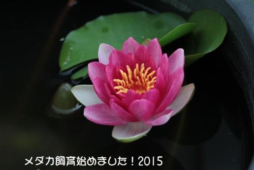IMG_0005_2015052908243402e.jpg