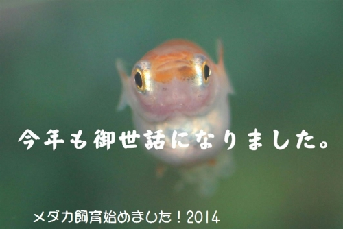 IMG_00513.jpg