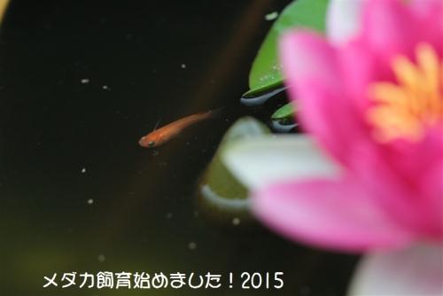 IMG_0081_2015053000120428b.jpg