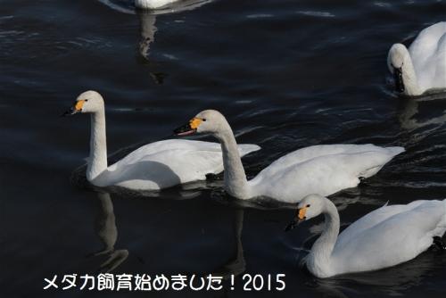 IMG_0092_201501311720220ad.jpg