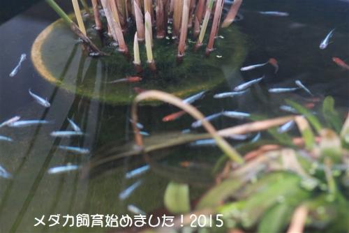 IMG_0258_20150121125453ff4.jpg