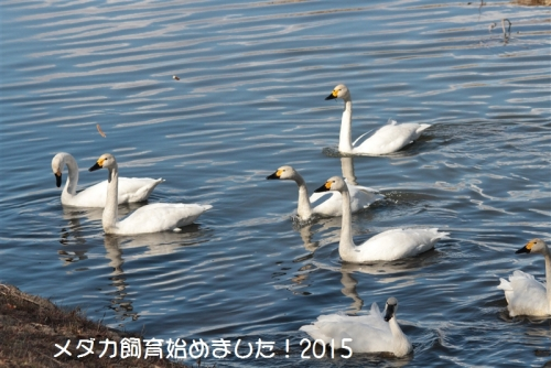 IMG_0298_20150131173147fbd.jpg