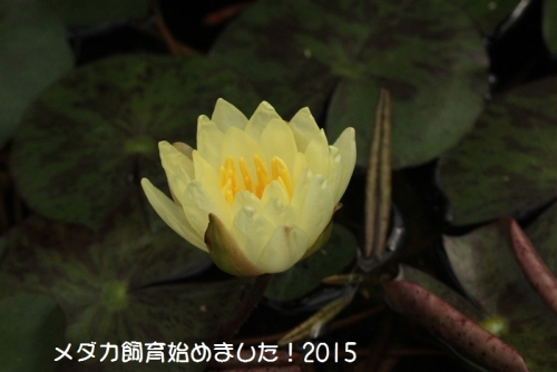 IMG_0375_20150608101228516.jpg