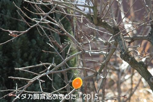 IMG_0908_20150219173116e62.jpg