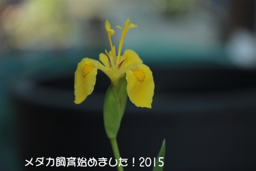 IMG_2071.jpg