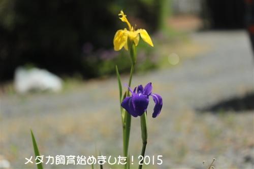 IMG_2131.jpg