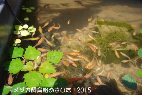 P1020094_20150308215800cbd.jpg